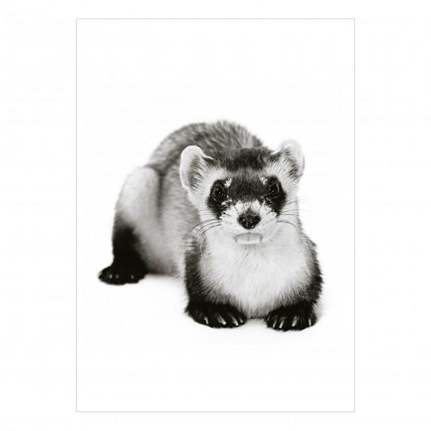 Postkarten-Set Bedrohte Tiere und Pflanzen