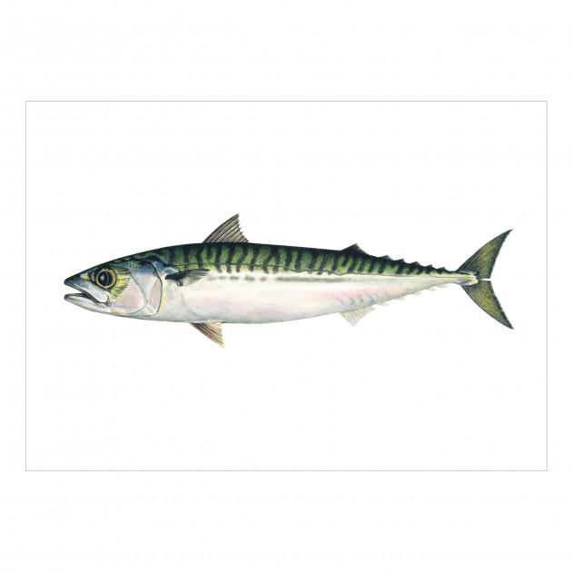 Postkarten-Set Fische