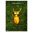 """Vorschau: Titelposter """"Artenvielfalt"""" grün"""