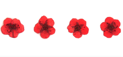 Pressed flowers, red bridal wreath 20pcs floral art resin craft nail art