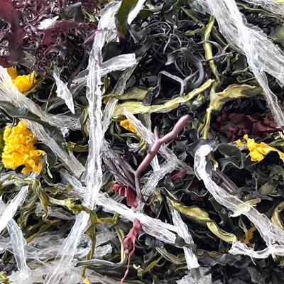 Organic dried Seaweeds Salad Mix 7 types, 20g Vegetarian Vegan Diet