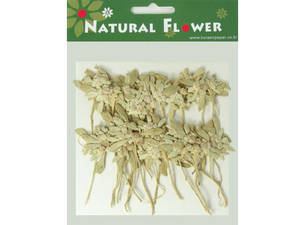 Pressed flowers, natural dried Edelweiss 20pcs for art craft card making