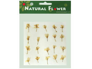Pressed flowers, rapeseed flower 20pcs for art craft card making