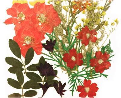 Pressed flowers mixed, pansy larkspur laceflower lobelia verbena cornflower