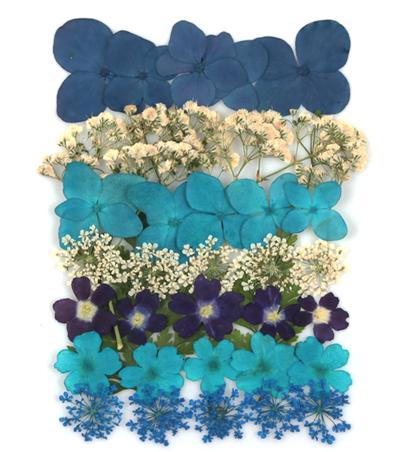 Pressed flowers mix in blue theme, hydrangea, verbena, baby's breath gypsophila,