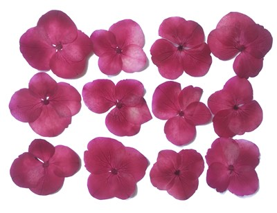 Presse flowers, mauve hydrangea 20pcs floral art craft
