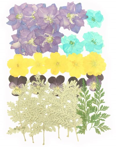 Pressed flowers mixed pack, larkspur, evening primrose, pansy, foliage
