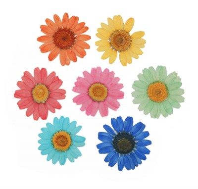 Pressed flowers 7 colors mixed pack, red green orange turquoise yellow blue pink