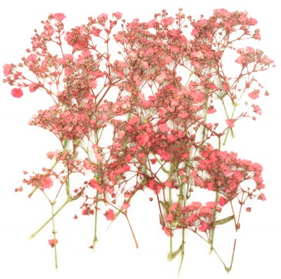 Pressed flowers, pink baby's breath 20pcs for floral art craft, nail art