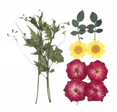 Pressed flower mix, red rose yellow marguerit daisy rose leaves ballon vine
