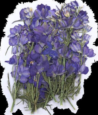 Pressed flowers, violet larkspurs on stalk 20pcs floral art craft