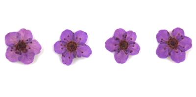 Pressed flowers, purple bridal wreath 20pcs floral art resin craft nail art