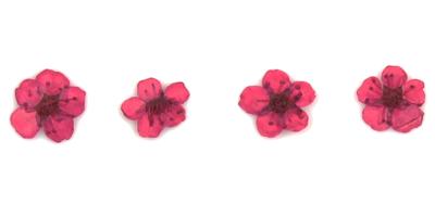 Pressed flowers, mauve bridal wreath 20pcs floral art resin craft nail art