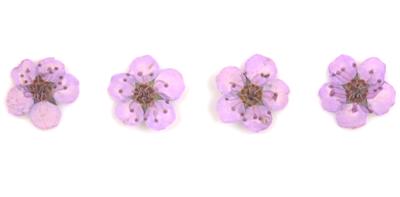 Pressed flowers, light purple bridal wreath 20pcs floral nail art resin craft