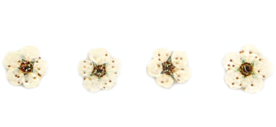 Pressed flowers, white bridal wreath 20pcs floral nail art, jewellery making