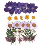 Pressed flowers mix, larkspur, marguerite daisy, lace flower, foliage