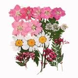 Pressed flowers 20pcs, pink larkspurs, lace flowers foliage floral art