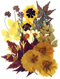 Pressed flowers garden tickseed pansy multicule cosmos maple foliage