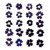 Pressed flowers, dark violet verbena 20pcs floral art craft