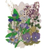 Pressed flowers violet, forget me not, lobelia pansy alyssum shamrock floral art