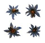 Pressed flowers, swertia pseudochinensis, false Chinese swertia 20pcs