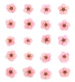 Pressed flowers, baby pink bridal wreath 20pcs floral art resin craft nail art