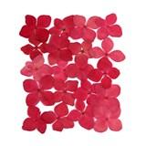 Pressed flowers, cherry pink hydrangea 20pcs floral art, craft