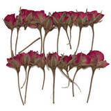 Pressed flowers, real dried flower, mini red rose buds, 20pcs