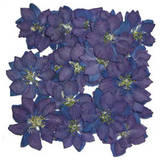 Pressed flowers, blue delphinium 20pcs for floral art, craft, scrapbooking