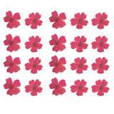Pressed flower, natural dried pink Verbena 20pcs for art craft card making