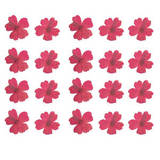 Pressed flower, natural dried pink Verbena 20pcs for art craft card making