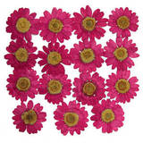Pressed flowers, real pink marguerite with yellow core 20pcs floral art craft