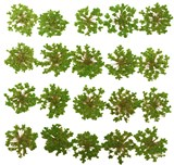 Pressed flowers, green lace flower 20pcs for floral art, craft, scrapbooking