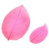 Pressed leaves, hot pink 20pcs floral botanical art, resin craft