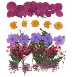 Pressed flowers, hydrangea, marguerite daisy, verbena, gypsophila, lace flower