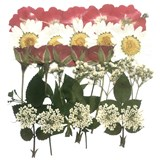 Pressed flowers mix, red rose, rose buds, marguerite daisy, lace flowers foliage