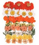 Pressed flowers cosmos marguerite daisy hydrangea lace flower verbena gypsophila
