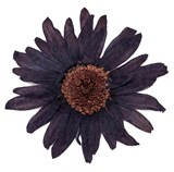 Pressed flowers, large navy daisy 10pcs floral art craft