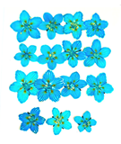 Pressed flowers, marsh grass of parnassus turquoise 15pcs floral art resin craft