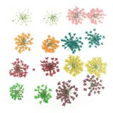 Pressed flowers, lace flower orange white yellow pink red green turquoise purple