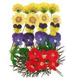 Pressed flowers, marguerite, pansy, larkspur foliage