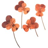 Pressed flowers, 2 tone orange pansy on stalk 20pcs floral art, craft