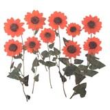 Pressed flowers, dark orange mini sunflower 10pcs