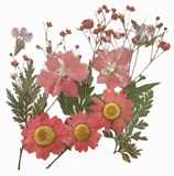 Pressed flowers foliage mix in pink larkspur marguerite daisy lobelia gypsophila