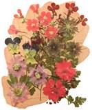 Pressed flowers pink lobelia verbena rodanthe larkspur gypsophila star flower
