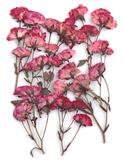 Pressed flowers, light plum roses leaves on stalk 20pcs floral art resin craft