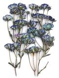 Pressed flowers, purple roses leaves on stalk 20pcs floral art, resin craft