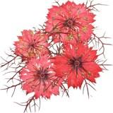 Pressed flowers, red nigellas 20pcs floral art, craft