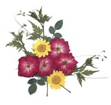 Pressed flower mix, red rose yellow marguerit daisy rose leaves ballon vine