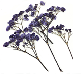 Pressed flowers, navy baby's breath gypsophila 16pcs floral art craft